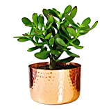 Alchemade 4' Hammered Copper Succulent Planter Plants
