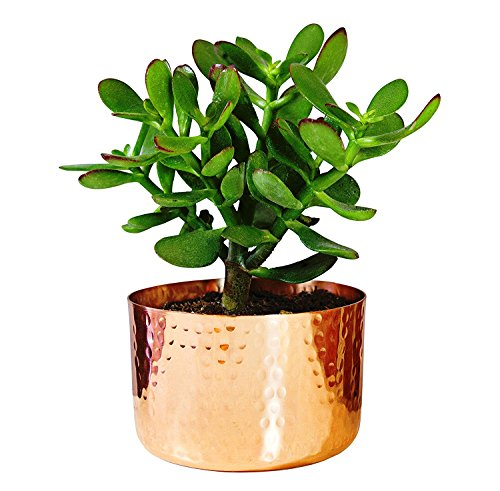 Alchemade 4 Hammered Copper Succulent Planter Plants