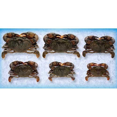 Handy Soft Shell Wild Caught Jumbo Crab, 3.5 Ounce - 48 per case.