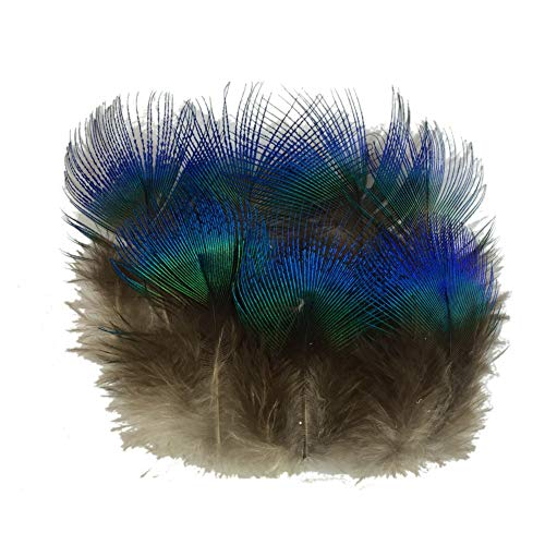 Sowder 50pcs Blue Peacock Plumage Feathers 1-3 Inches Home Wedding Decoration (Large Sale Feathers For Peacock)