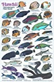 New Submersible Fish ID Card & Pocket Guide for Scuba Divers, Snorkelers & Fishermen - Fishwatcher's Field Guide to Fish of Hawaii