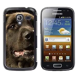 Vortex Accessory Hard Protective Case Skin Cover For Samsung Galaxy Ace 2 / I8160 - Flat Coated Retriever Dog Black