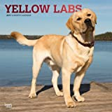 QUALITY 2019 YELLOW LAB RETIEVER Wall Calendar-Best Holiday Gift -Great for mom, dad, sister, brother, grandparents, gra gay,PLANNER, CALENDAR PLANNER,CALENDAR WALL,POCKET, CALENDAR MONTHLY.