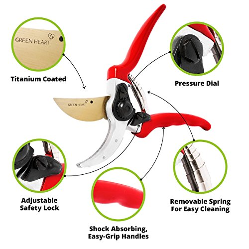 Professional Pruning Shears with Titanium Coated Blades - Lightweight Gardening Tools for Comfortable Use - Find Your Green Thumb with Rust Resistant Cutters That Stay Sharp Longer by Green Heart (Image #1)