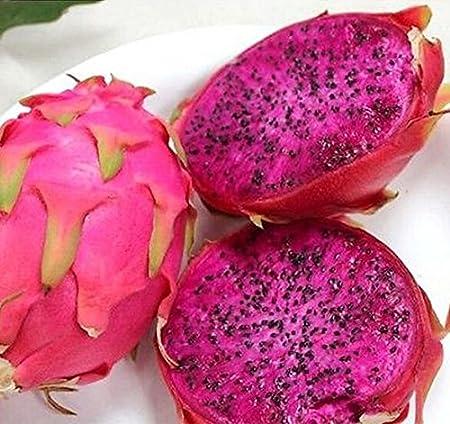 50pcs Pitaya Seeds WHITE DRAGON Fruit Seeds Pitaya // Pitahaya // Strawberry Pear