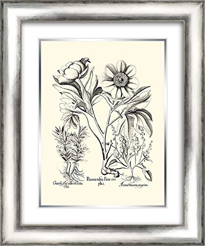 er Peony IV 20x24 Silver Contemporary Wood Framed and Double Matted Art Print by Besler, Basilius ()