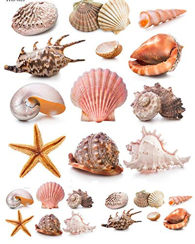 Shore Shells - 11034 - Ceramic Decal - Enamel Decal - Glass Decal - Waterslide Decal - 3 Different Size Sheet (Images) to Choose from. Choose Either Ceramic (Enamel) or Glass Fusing Decals XpressionDecals
