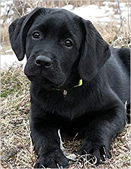Black Labrador Puppy Notepad: Dog Wisdom Quotes (Awaiting