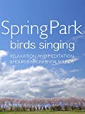Spring Park Birds singing Relaxation and Meditation 8 hours Environmental sounds