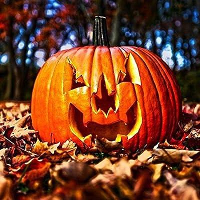Jack O' Lantern (Halloween) Pumpkin Seeds (20 Seed Pack) : Garden & Outdoor