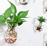 Pack of 3 Plant Pots Water Plant Containers Glass Flower Pots Wall Hanging Glass Planters Plant Containers Hanging Planters Air Plant Terrariums