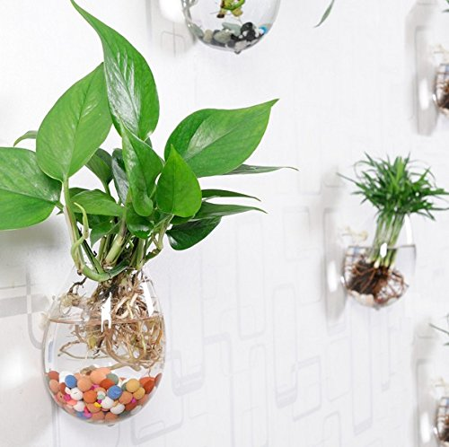 Pack of 3 Plant Pots Water Plant Containers Glass Flower ...