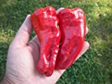 Cubanelle Pepper 20 Seeds By Pepper Gardeners