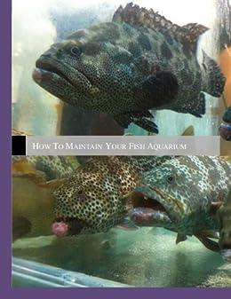 How to maintain your fish aquarium ebook stella velejo for Your fish store