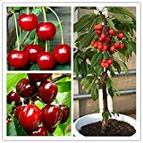 20pcs Cherry Seeds - Gardening Seeds Home Indoor Fruit Bonsai Dwarf Cherry Tree Seed Planting