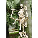 Crazy Bonez Posable Skeleton