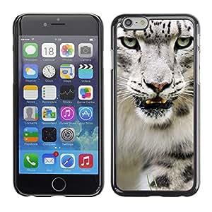 Qstar Arte & diseño plástico duro Fundas Cover Cubre Hard Case Cover para Apple (5.5 inches !!!) iPhone 6 Plus ( Angry Roar Leopard Snow White Furry)
