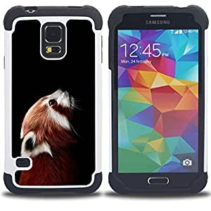 "Pulsar ( Little Red Panda Cara linda Retrato Animal"" ) SAMSUNG Galaxy S5 V / i9600 / SM-G900 V SM-G900 híbrida Heavy Duty Impact pesado deber de protección a los choques caso Carcasa de parachoques"