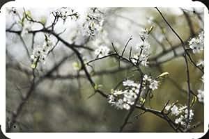Springtime 4 Metal Poster Tin Plate Sign 20*30cm