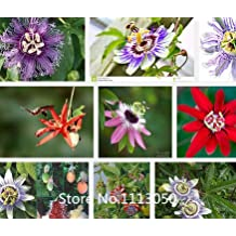 Promotion 100Pcs Exotic Passion Fruit Seeds Purple Passiflora edulis Passion Flower seeds Outdoor plant Novel Seed