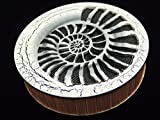 Sound of the stream 185 mm / Strumok (Ammonite) Great sound New Percussion Rainstick