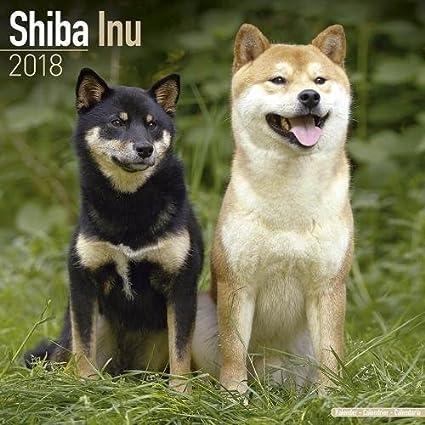 shiba inu calendar dog breed calendars 2018 2019 wall