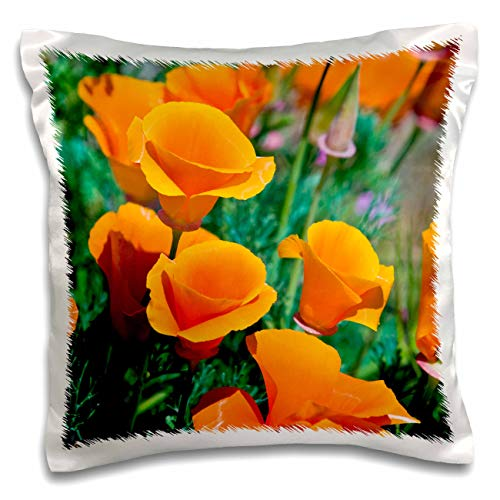 - 3dRose Danita Delimont - Poppy - California Poppies, Antelope Valley, California, USA - 16x16 inch Pillow Case (pc_314711_1)
