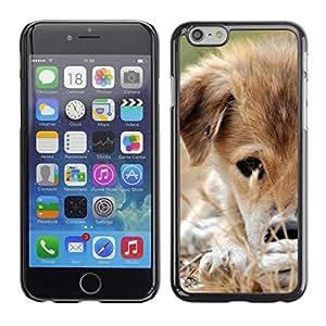 TopCaseStore / la caja del caucho duro de la cubierta de protección de la piel - Mongrel Puppy Brown White Grass Dog - Apple iPhone 6