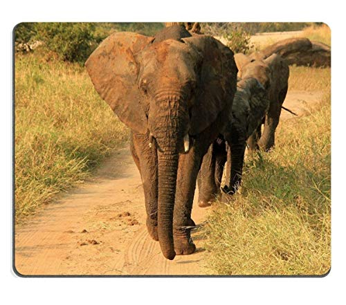 - Tony Mouse Pad Natural Rubber Mouse pad Elephant Family Loxodonta Africana Approacing Tarangire National Park Tanzania