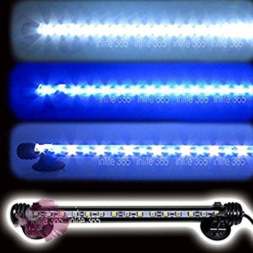 ES Tubo DE LUZ LED SMD con LUZ Blanca Y LUZ Azul(LUZ DE Luna): Amazon.es: Productos para mascotas