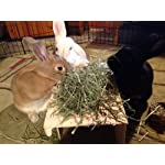 """Small Pet Select 2nd Cutting """"Perfect Blend"""" Timothy Hay Pet Food 22"""