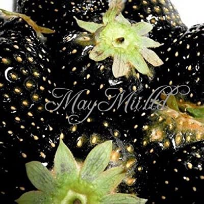 100 PCS Strawberry Seeds Nutritious Delicious Blue Black Fruit Vegetables Seed Black