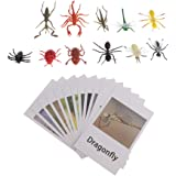 Montessori Insect Animal Match - Miniature Insects Figurines (12pcs) with Matching Cards (12pcs) - 2 Montessori Learning Toy, Language Materials