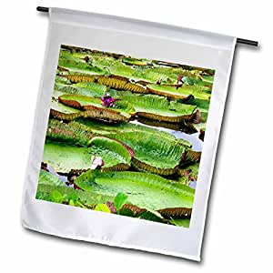Danita Delimont - Flowers - Water lily flowers, Amazon, Manaus, Brazil - SA04 DFR0361 - David R. Frazier - 12 x 18 inch Garden Flag (fl_85703_1)