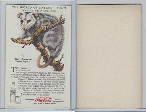 F213-3 Coca Cola, Nature Study, Wild Animals, 1920's, 3 Opossum from OpenBinders