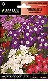 Semillas de Flores - Verbena Alta Variada Híbrida - Batlle
