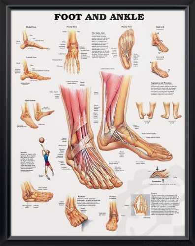 medical poster foot
