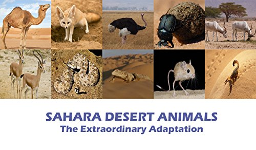 SAHARA DESERT ANIMALS: THE EXTRAORDINARY -