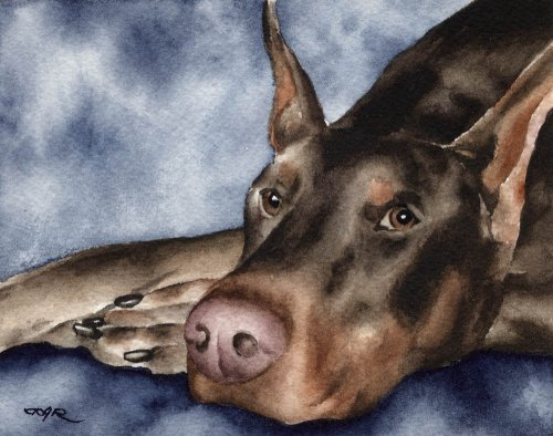 Red Doberman Pinscher Art Print by Watercolor Artist DJ Rogers