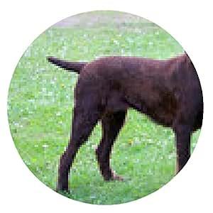 alfombrilla de ratón perro Pudelpointer típica en el jardín - ronda - 20cm