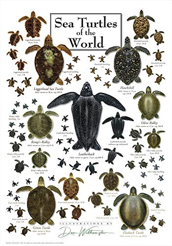 - Heritage Puzzle Sea Turtles of The World - 550 Piece Jigsaw Puzzle