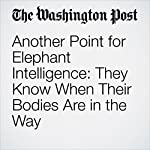 Another Point for Elephant Intelligence: They Know When Their Bodies Are in the Way | Ben Guarino