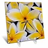 3D Rose USA-Hawaii-Oahu-Plumeria Flowers in Bloom Desk Clock, 6'' x 6''