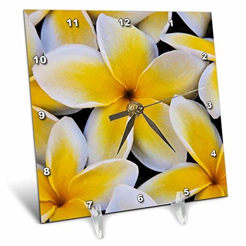 3D Rose USA-Hawaii-Oahu-Plumeria Flowers in Bloom Desk Clock, 6'' x 6'' by 3dRose
