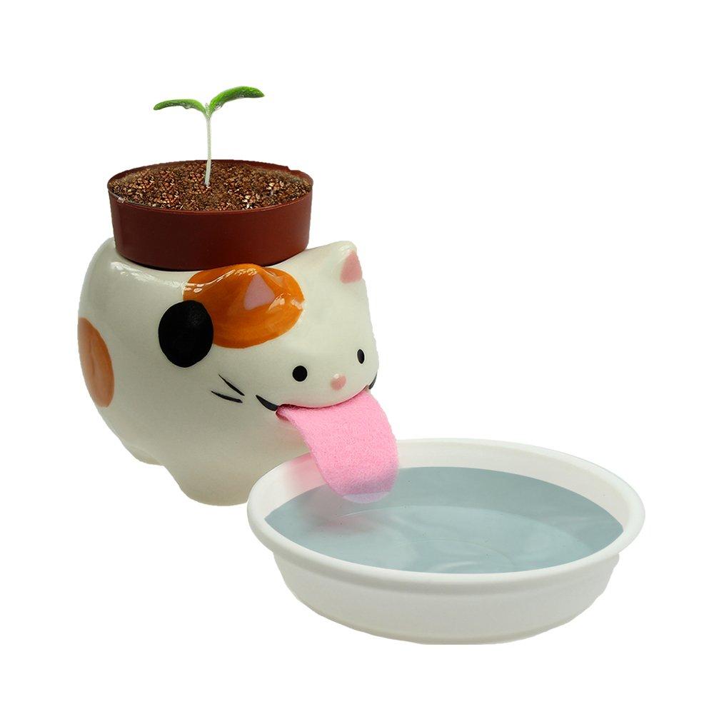 Monsterzeug Erdbeere im Peropontopf Katze, Erdbeerpflanze Zum Selberzüchten, Wilde Erdbeere Zum Selber Pflanzen im Katzentopf