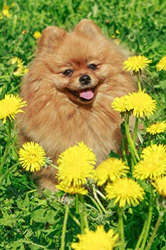 Pomeranian-notebook-lined-writing-journal-diary-120-lined-pages-Best-Friend-Series