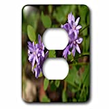 3dRose TDSwhite – Summer Seasonal Nature Photos - Floral Twin Blue Brodea Flowers - Light Switch Covers - 2 plug outlet cover (lsp_284513_6)