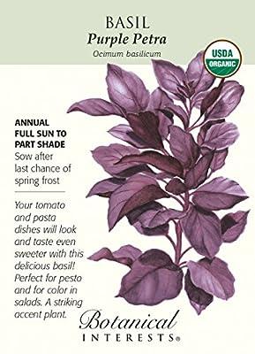 Purple Petra Basil Seeds - 500 mg - Organic