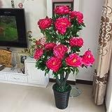 Sproud The Rich Tree Plants Bonsai Bonsai Tree Flowers Off The Living Room Decoration,B