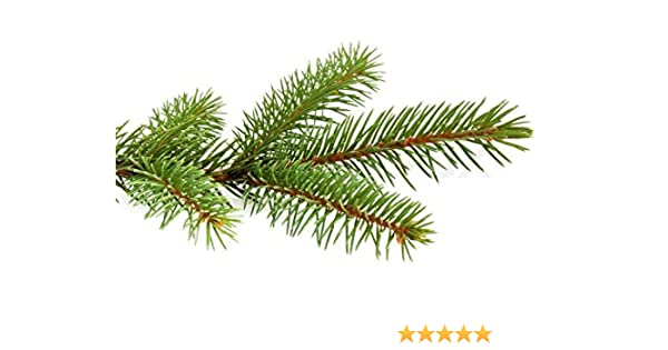 amazon com fresh douglas fir and pine boughs 5 pound box home